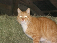 photo of barn cat Frodo