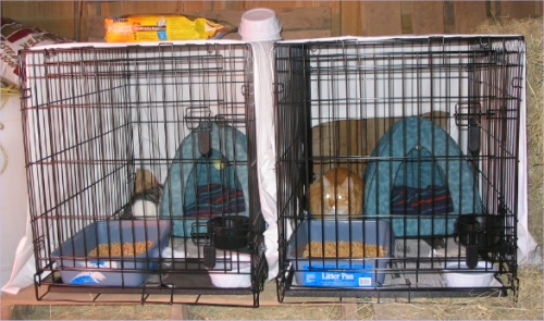 photo of two cats in confinement cages